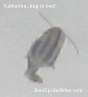 This bug was found in my bed