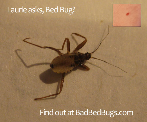 Bed Bug Legs Discussion 3