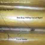 bed bugs in used furniture on headboard