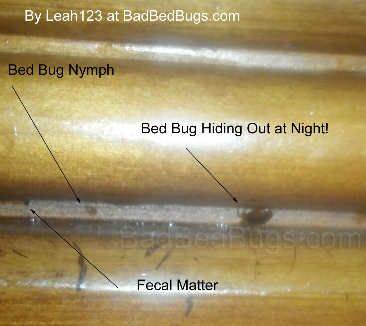 Marvelous Bed Bugs Brought Into Home From Used Furniture Customarchery Wood Chair Design Ideas Customarcherynet