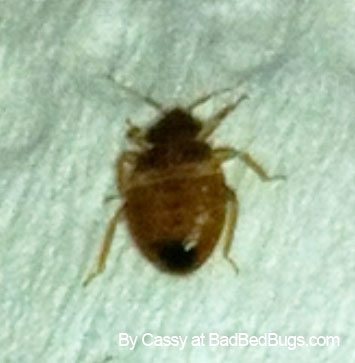 Carpet Beetles In My Bathroom Vidalondon. Carpet Beetles In Bathroom   Home Design