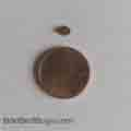 Round adult bed bug next to coin