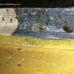 bed bug infestation on boxspring showing bugs