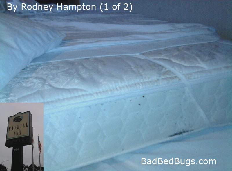Holiday Inn Resort Lake Buena Vista Bed Bugs