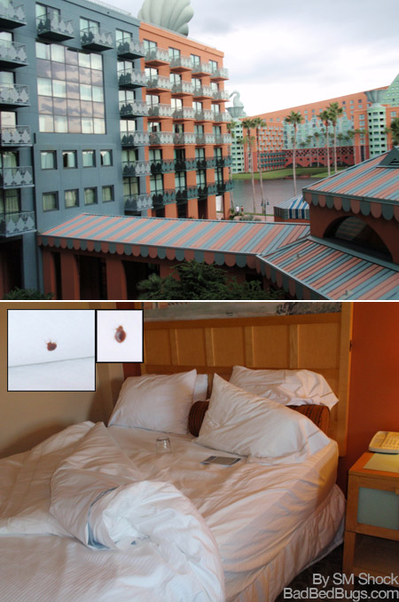 Bedbugs At Disney Swan Resort