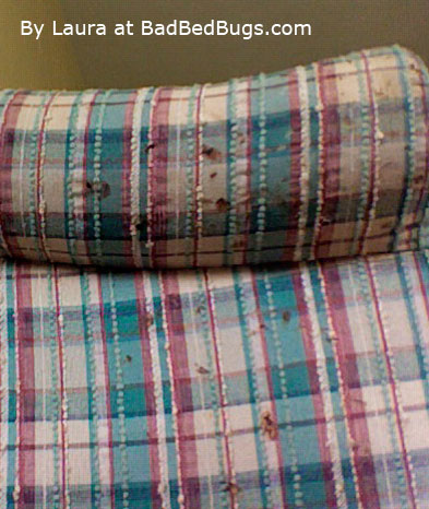 Bed Bugs in Sofa