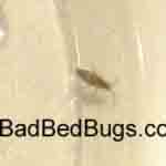 Sallymae bugs found w bites 1 of 4