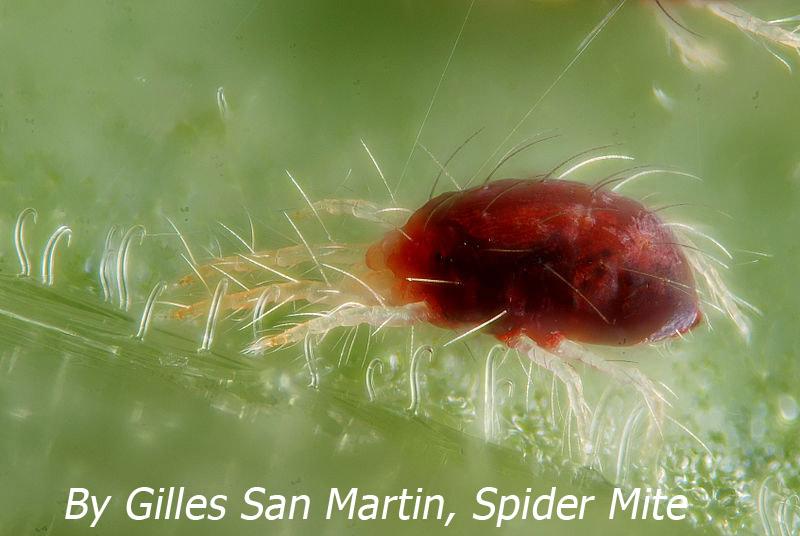 Image Result For Bedbugs Com
